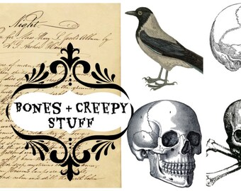 Digital clip art | Creepy Halloween clip art images | Skulls raven bones skeletons | PNG files | transparent background | Instant download