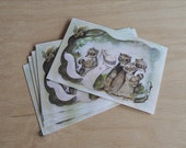 Pack of five, raccoon postcards