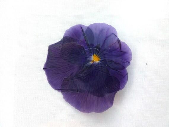 Laminated Pressed Flowers ~ Pressed dried laminated flowers purple pansies by hamba on