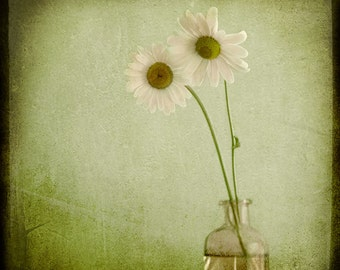 Green Pink Daisies in Vase Photograph--Friends--TTV Fine Art