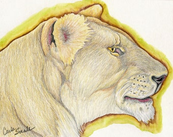 Lioness Wildlife Lion Cat Original Colored Pencil Drawing  Wildlife Art-Carla Smale