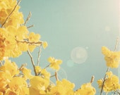 Nature photography, spring blossoms, sun flare, blue sky, yellow, blossoms, pastel, cheerful decor, spring, flower photo - Yellow and blue