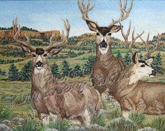 buck Wildlife Mule Deer sandhills bluffs nature ACEO mini art PRINT Kim Loberg Art Nebraska Artist wild animal EBSQ
