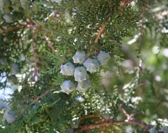 Mountain Juniper Fragrance Oil