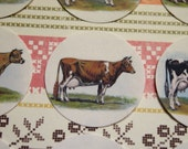 24 Round Vintage style Dairy Cow Stickers/Envelope Seals