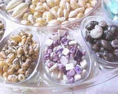 100s of SHELLS, Drilled for making Jewelry--Many different Shapes, Sizes and Colors--For Artistic Designing-Crafting-Embellishments and More