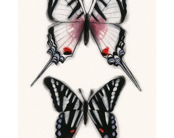 "Butterfly art drawing : Swallow tail Butterflies 8.3"" X 11.7"" print - 4 for 3 SALE"