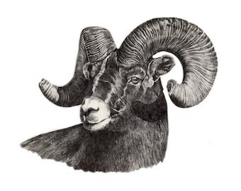 RAM Art Print Signed by Artist DJ Rogers