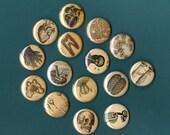 Vintage Anatomy MAGNETS- Set of 6 Assorted