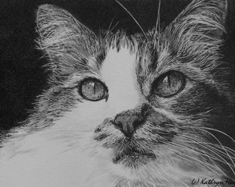 Original Cat Drawing, The Eyes Have It