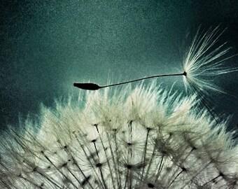 Misunderstood - modern contemporary nature dandelion macro  fine art photograph spring inspirational wall art