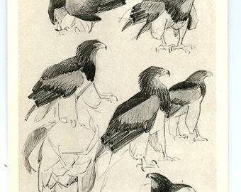 Vintage Eagles postcard V. Vatagin  artist