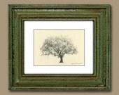 Gordonston Savannah Live Oak Tree Pen and Ink Drawing