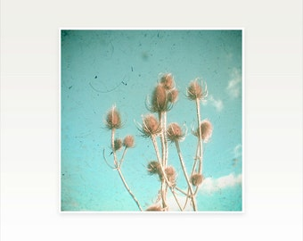 Thistle Art, Nature Photography, Turquoise Wall Art, Flowers, Fall - Distant