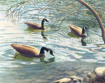 Canada Geese Art Watercolor Painting Print by Cathy Hillegas, 12x16, brown, teal, gold, blue, purple, black, wildlife art, lake house decor