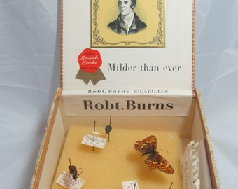 Bug collection in a cigar box