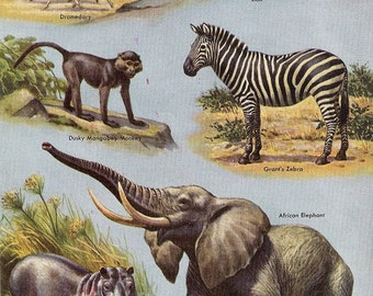 Color Print of Wild Animals of the World