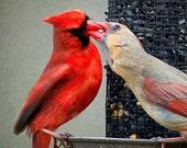 Mini Canvas - Feeding Cardinals perched on a bird feeder.