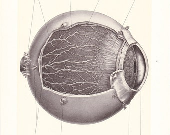 1899 Human Anatomy Print - Ciliary Nerves of Eye - Vintage Antique Medical Anatomy Art Illustration for Doctor Hospital Office