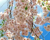 Spring Blossoms Floral Fine Art Photography Photo Print