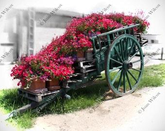 Loire Valley Flower Cart Tours, France Color Splash Floral Fine Art Photography Photo Print