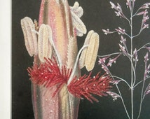 Vintage botanical flower print, 1924 Purple Top Grass magnified