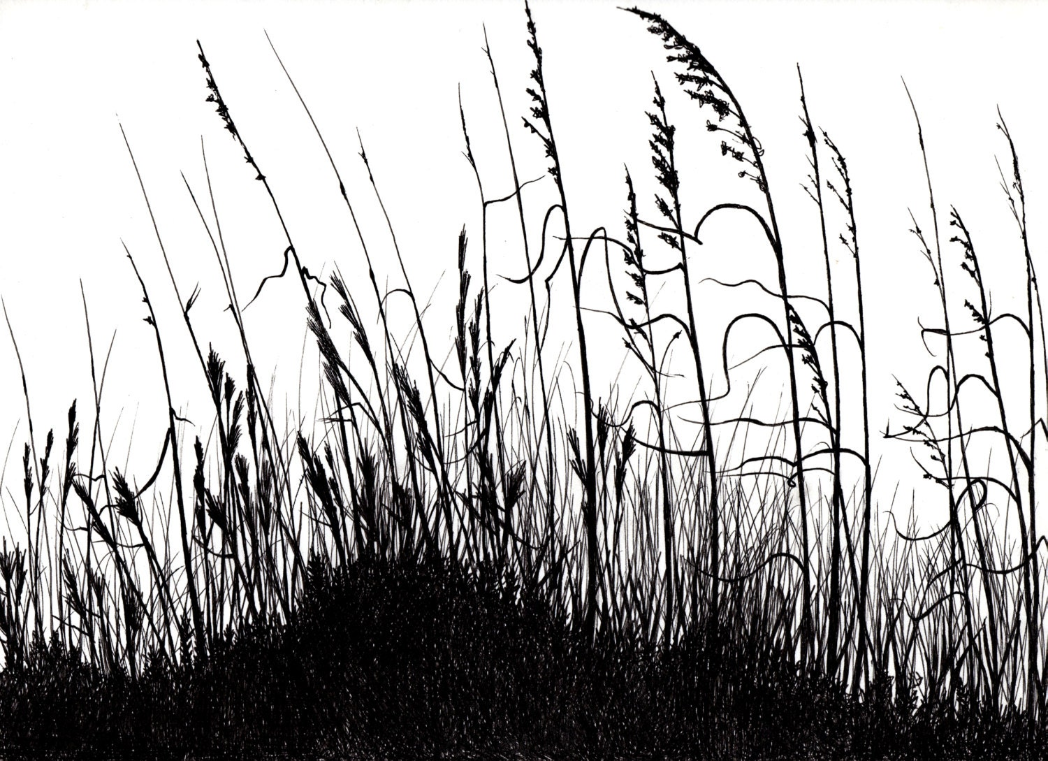 Line Drawing Grass : Black and white drawing grass pictures to pin on pinterest