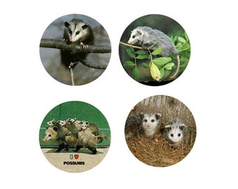 Possum  Magnets  4 Perky Possums for your Home or to give as a Unique Gift