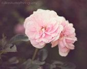 Flowers Photograph, Nature Photography, Roses, Soft Blush Pink, Feminine, Garden Summer Art, Floral Wall Art, Natural Botanical Spring Art