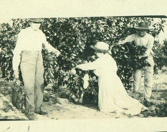 Picking Fruit Woman in WHite Dress Pocketbook Sitting on Ground Tree Orchard RPPC Real Photo Postcard Antique Black White Photo Photograph