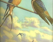 vintage book print illustration - bird print Illustrated by Walter Alois Weber - Cliff Swallow and Barn Swallow