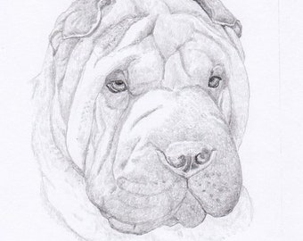 Shar Pei Signed Personalized Original Pencil Drawing Double Matted Print -Free Shipping- Desert Impressions