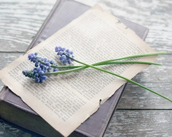 Flowers on Old Book Photograph purple hyacinths vintage book rustic still life cream brown romantic 8x12
