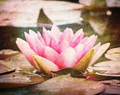 Lotus Blossom - 8x12 inch fine art photograph, flower photography, made in Israel