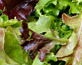 Lettuce, Organic Gourmet Baby Lettuce Seeds   Perfect for Growing in Containers