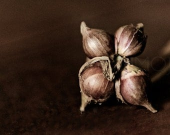 Onion bulbs Photography food art kitchen organic harvest chef farm brown cocoa summer masculine sepia - The lengths - fine art photograph