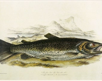 Trout Fish Print Book Plate SALE, Buy 3, get 1 FREE