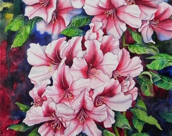 Rhododendrons in Pink