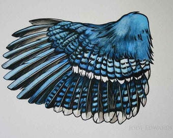 Blue Jay Wing Study - Graphic style