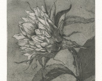 Sunflower Fine Art Etching, Helios