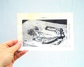 Vintage Picture of Skeleton, Vintage Anthropology Science, Paper Ephemera