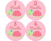 Baby Month Milestone Stickers, Girls Monthly Stickers, Monthly Bodysuit Stickers, Monthly Baby Stickers, Month by Month, Turtle (G130)