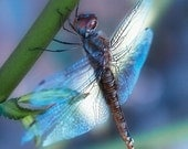 Personal Journey- Dragonfly photography- dragonfly collective works- unique colors- home-