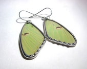 Real Luna Moth butterfly wing dangle Earrings