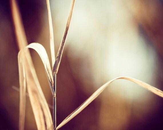 "Nature Photography, autumn fall photo dark brown beige cream neutral rustic rust cream botanical print maroon photograph, ""Formed in Secret"""