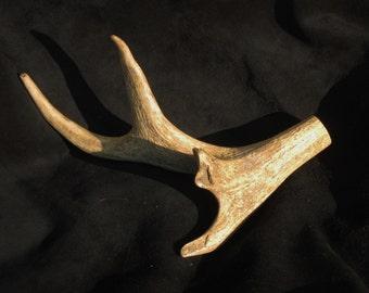 Elk Antler , Natural End -  for furniture, displays, knifemaking, Cabin, Crafts, Medieval, SCA - OOAK