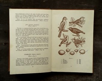 1940s bird book British Nesting Birds and their eggs