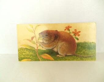 Vintage Mammal Flash Card Color Paper Ephemera Vole 60's (item 12)