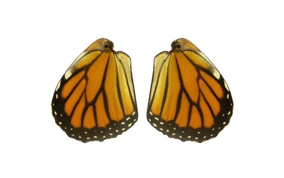 Real Monarch Butterfly Wings for Crafting Monarch Butterlfy