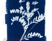"Cyanotype ""Flora"" Unique Print"